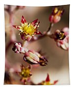 Succulent Flowers Tapestry