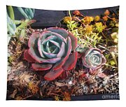 Succulent Plants. Multi-colored Tapestry