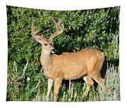 Summer Buck Tapestry