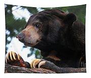 Sun Bear-7859 Tapestry