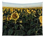 Sunflower Fields  Tapestry
