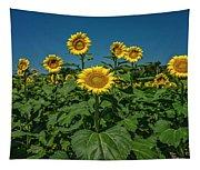 Sunflowers Weldon Spring Mo Ver1_dsc9821_16 Tapestry