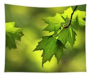 Sunlit Maple Leaves In Spring Tapestry