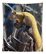 Sunning Squirrel Tapestry