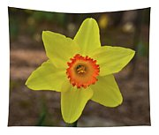Sunrise Daffodil Tapestry