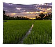 Sunset Rice Fields In Cambodia Tapestry