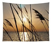 Sunset Through The Dune Grass Tapestry