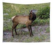 Sweet Elk Calf Tapestry