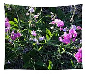 Sweet Pea In Tahoe Tapestry