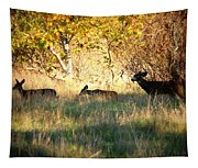 Sycamore Grove Series 10 Tapestry