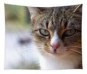 Tabby Cat Portrait Tapestry