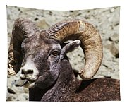 Taunting Bighorn Tapestry