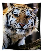That Tiger Look Tapestry