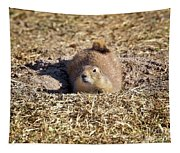 The Amazing Black-tailed Prairie Dog Tapestry