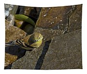 The Bath - American Goldfinch - Spinus Tristis Tapestry
