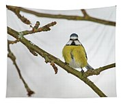 The Bold One. Eurasian Blue Tit Tapestry