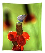 The Butterfly And The Coneflower Tapestry