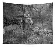 The Calm Of A Moose Bw Tapestry