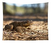 The Common Toad 4 Tapestry