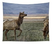 The Cow Elk Tapestry