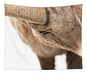 The Eye Of The Ram Tapestry