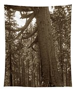 The Grizzly Giant Is A Giant Sequoia In Mariposa Grove Is In Yosemite Circa 1916 Tapestry