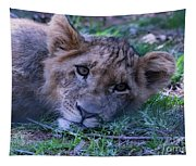 The Lion Cub Tapestry
