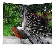The Many Quills Of A Peacock Tapestry