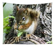 The Most Adorable Baby Squirrel Tapestry