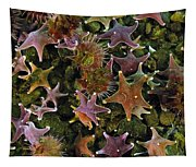 The Parade Of Stars Tapestry