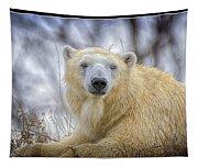 The Polar Bear Stare Tapestry