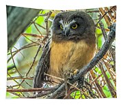 The Savvy Saw-whet Tapestry