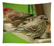Two Finch's Tapestry