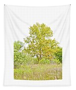 The Sycamore Tapestry