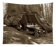 The Wawona Tree Mariposa Grove, Yosemite  Circa 1916 Tapestry