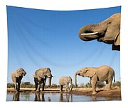Thirsty Elephants Tapestry
