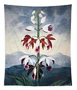 Thornton: Limodoron Tapestry