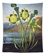 Thornton: Pitcher Plant Tapestry