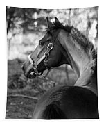 Thoroughbred - Black And White Tapestry