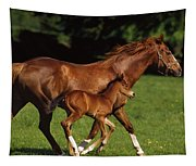 Thoroughbred Chestnut Mare & Foal Tapestry