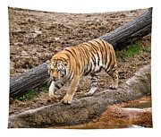 Tiger On The Prowl Tapestry