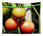 Tomatoes Ripening On The Vine Tapestry