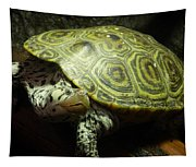 Turtle With A Tale To Tell Tapestry