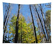Trees Tapestry