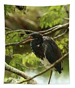 Tricolored At Rest  Tapestry