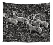 Trophy Rams Tapestry