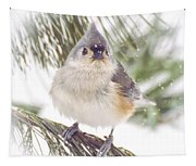 Tufted Titmouse Snow Face Tapestry