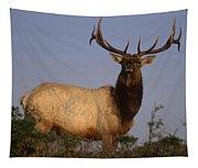 Tule Elk - Tomales Point Tapestry