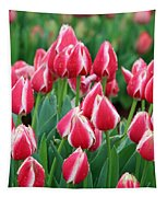 Tulips - Candy Apple Delight 02 Tapestry