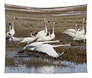 Tundra Swans Alberta Canada 3 Tapestry